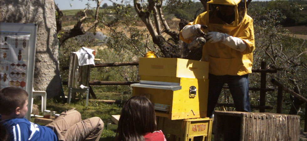 spiegazione-delle-api-e1363224257469